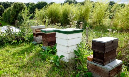 Bees At The Fold