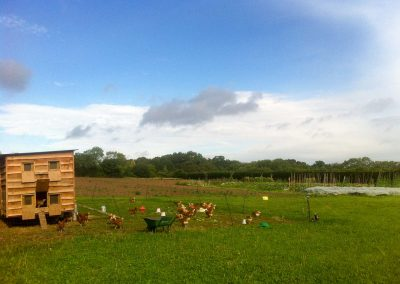 Fold Farm for website-18