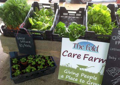 Fold Farm for website-3