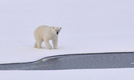 In Praise of Global Warming… (please don't)