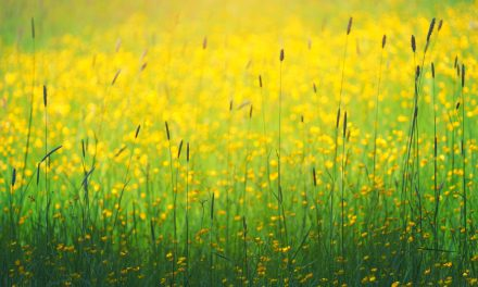 Sneezing and Wheezing? How to survive the pollen season