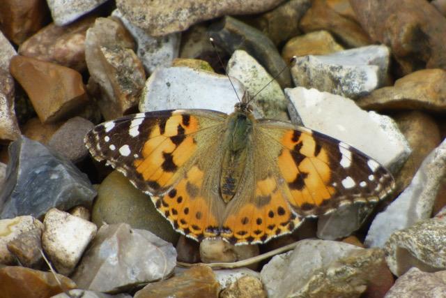 Butterflies and Summer