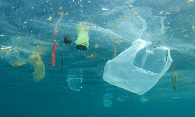 How you can go plastic free this July