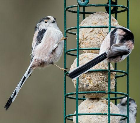 War In The Bird World